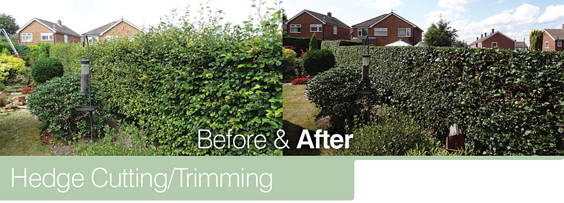 Hedge Cutting/Trimming - Before & After