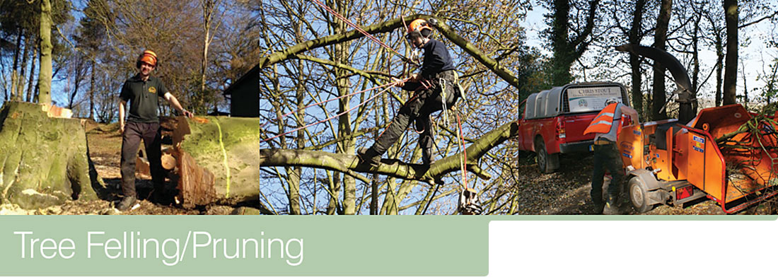 Tree Felling/Pruning